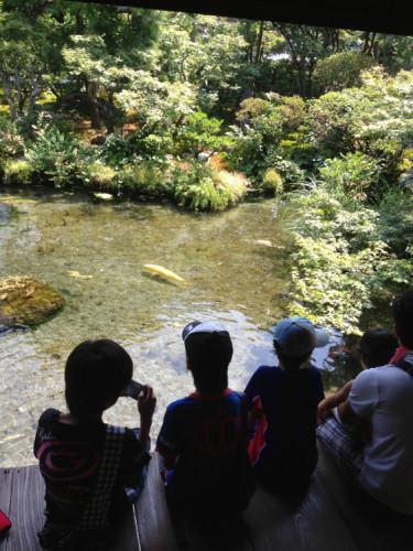 長崎 島原 鯉の泳ぐまち の 四明荘 庭園の湧水と鯉