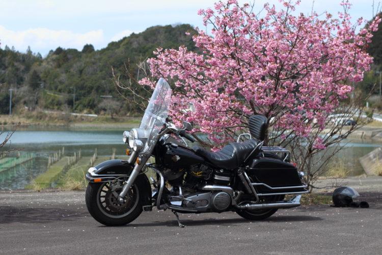 志摩あたりの桜とショベルヘッドFLH