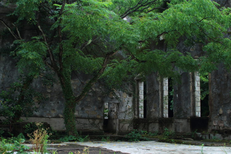 川棚 片島魚雷発射試験場跡 建物内部に生えている木