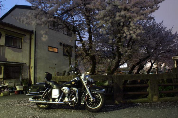 ショベルヘッドFLH80 1983年式と夜桜