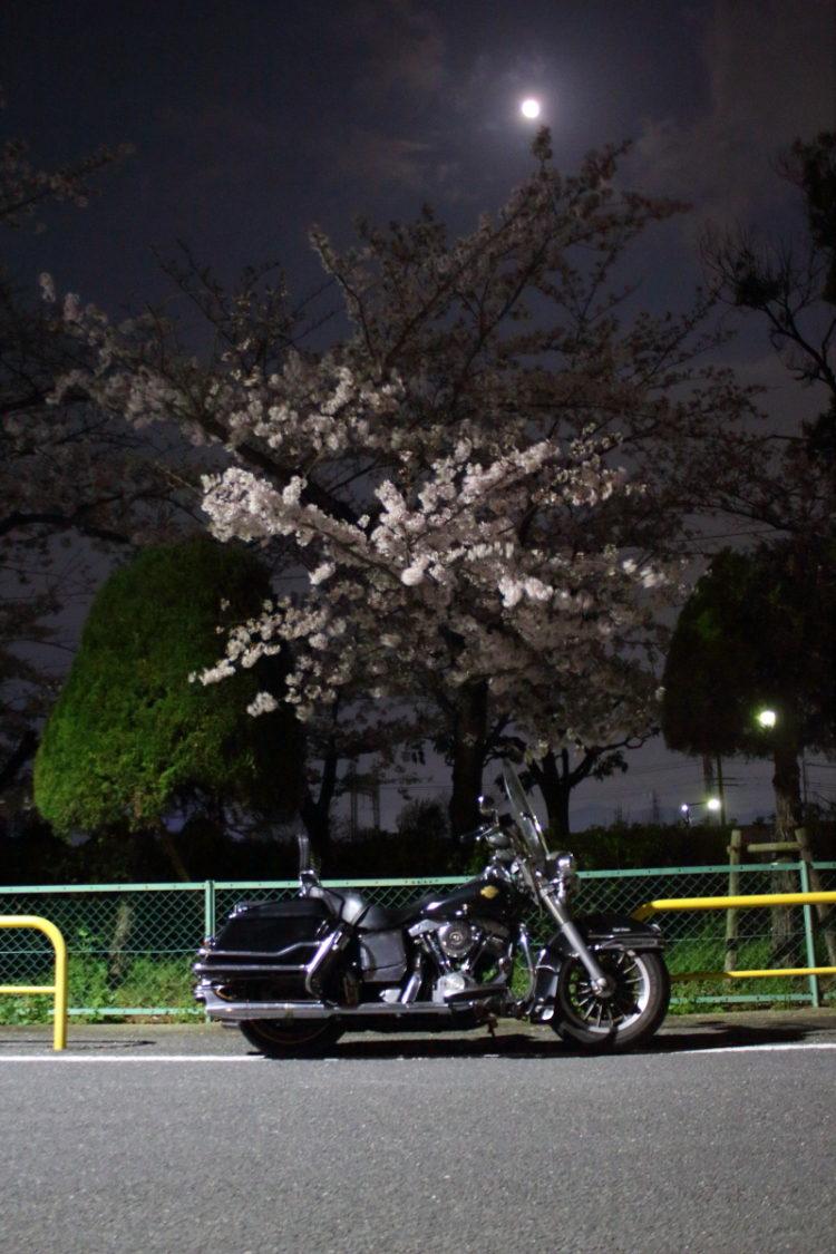 夜桜と月夜の下のハーレーショベルヘッド1983FLH